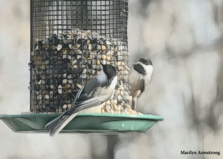 180-Two-Chickadees-More-Birds-2-20181123_232
