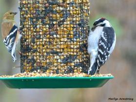 180-Newer-Woodpecker-Warbler-2-Sunday-Birds-12162018_229