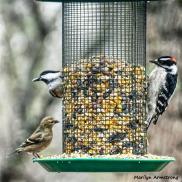 180-Square-AI-Woodpecker,-Warbler-Nuthatch-2-Sunday-Birds-12162018_252