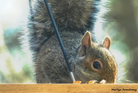 180-Squirrel-1-20181206_003