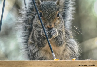 180-Squirrel-1-20181206_004