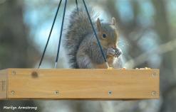 180-Squirrel-1-20181206_009