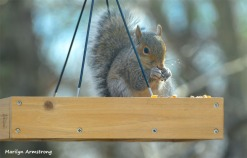 180-Squirrel-1-20181206_009