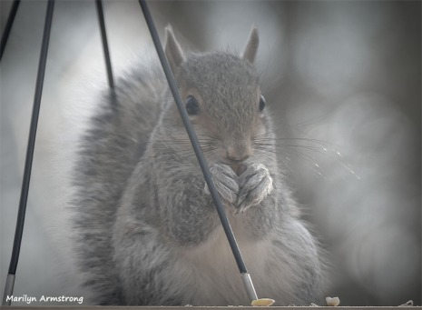 180-Terrified-Squirrel-1-20181206_006