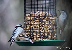 350-Heap-of-Monday-Birds-New-Lens-12172018_325