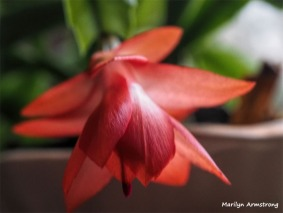 300-Macro-Pink-New-Year-Cactus-12312018_307