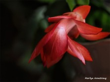 300-Macro-Pink-New-Year-Cactus-12312018_312