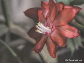 300-Macro-Pink-New-Year-Cactus-12312018_321