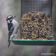 300-Square-Newer-Woodpecker-Monday-Birds-New-Lens-12172018_315