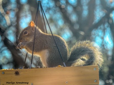 350-2-Squirrel-12232018_103
