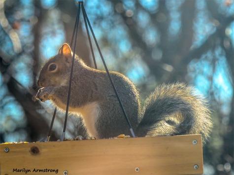 350-2-Squirrel-12232018_103