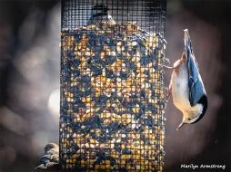 350-Birds-Not-Of-A-Feather-4th-Thursday-Birds-12272018_137
