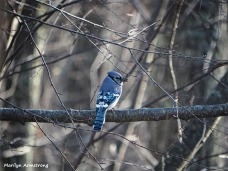 Welcome Blue Jay!