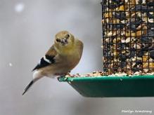 350-Close-Warbler-Xmas-Eve-Birds-12242018_057