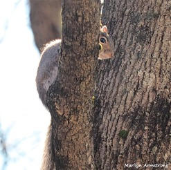 350-Square-New-Squirrel-in-Tree-12232018_112