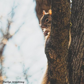 350-SquareSquirrel-in-Tree-12232018_114