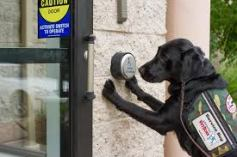 Dog pushing button to open door