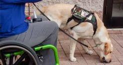 Dog picking up dropped item