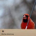 300-cardinal-final-tuesday-birds-01292019_102