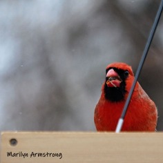300-cardinal-final-tuesday-birds-01292019_102