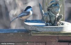 300-chickadee-and-toad-sunday-2-birds-01122019_005