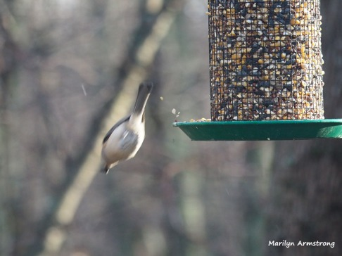 300-two-flying-first-sunday-birds-01062019_028