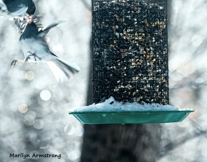 300-fighting-juncos-frozen-monday-birds-01212019_008