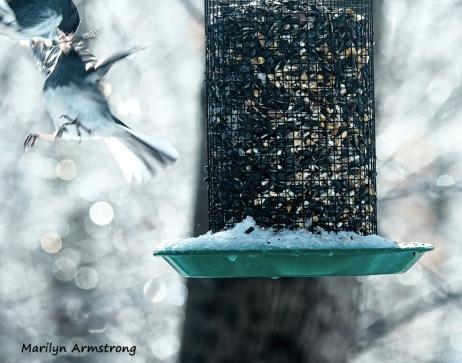 300-fighting-juncos-frozen-monday-birds-01212019_008
