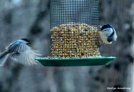 300-flying-first-friday-birds-01042019_032