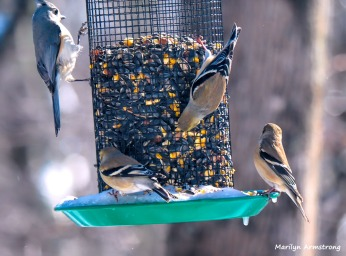 300-hungry-birds-01222019_100