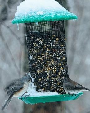 300-junco-titmouse-snowy-birds-01202019_035