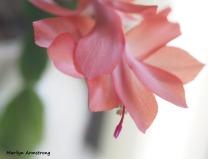 300-last-cactus-flower-01072019_007