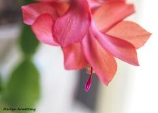 300-macro-last-cactus-flower-01072019_006