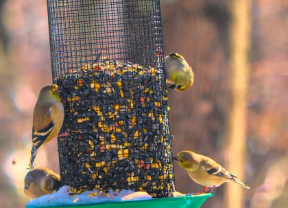 300-new-hungry-birds-01222019_087