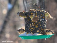 300-new-hungry-birds-01222019_093