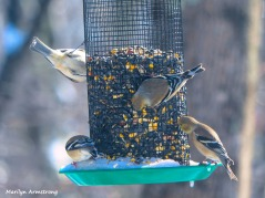 300-new-hungry-birds-01222019_101