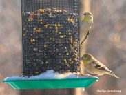 300-new-hungry-birds-01222019_110