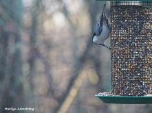 300-nuthatch-first-sunday-birds-01062019_082