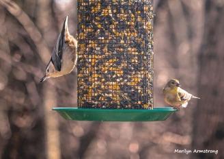 300-nuthatch-warbler-sunday-3-birds-01132019_064