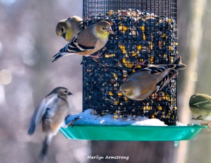 300-one-landing-and-more-hungry-birds-01222019_068