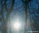 300-sunlight-early-morning-01042019_003-1