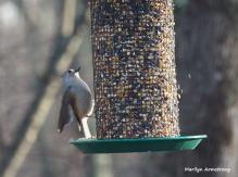 300-titmouse-first-sunday-birds-01062019_026