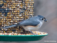 300-titmouse-thursday-2-birds-01102019_006