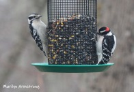 300-tw0-woodpeckers-tuesday-birds-01292019_317