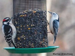 Woodpecker and the Nuthatch