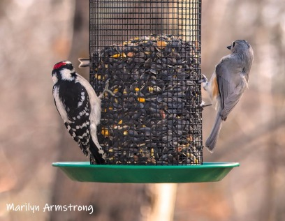 The Woodpecker and the Tufted Titmouse