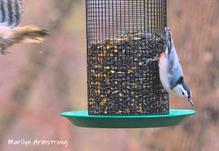 Departing woodpecker (I think) and a nuthatch