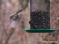 300-flying-away-birds-final-tuesday-birds-01292019_211