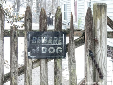 180-Beware-of-Dogs-Gate-Gar-Winter-Sunday-02242019_035
