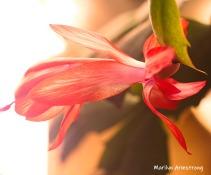 300-bloomiing-cactus-02222019_105